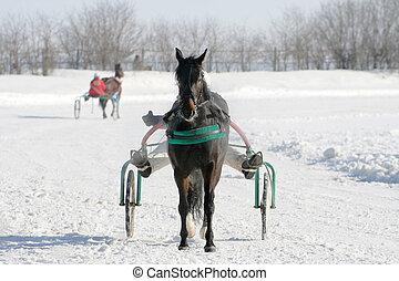 paarde, wite sneeuw