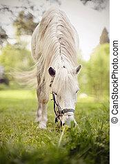 paarde, witte , manen, lang, grazen