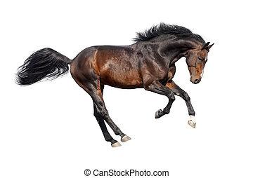 paarde, witte , vrijstaand