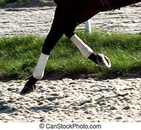 paarde, zand, het galopperen