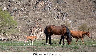 paarden, berg, groep, pasture., animals.