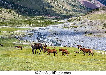 paarden, bergen, rivier, kudde