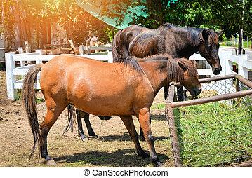 paarden, boerderij, gras, grazen, stal