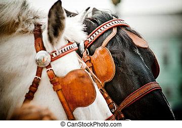 paarden, closeup