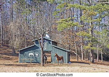 paarden, groene, twee, schuur