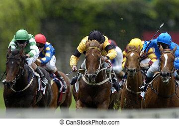 paarden, head-on., hardloop, actie, gedurende, bos