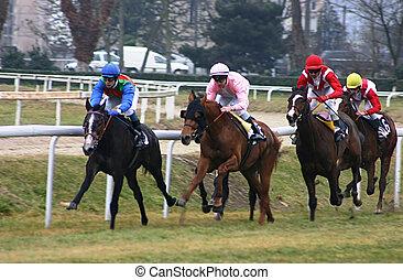paarden, het snelen