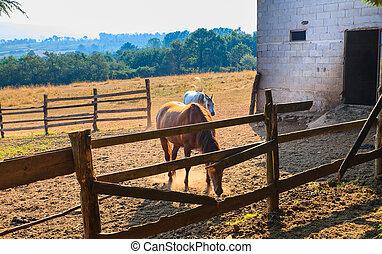 paarden, in, de, boerderijdieren