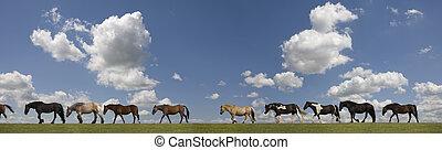paarden, in een rij