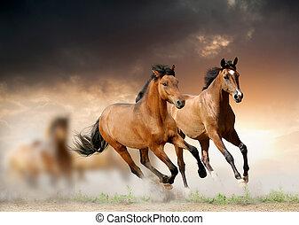 paarden, in, ondergaande zon