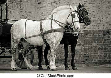 paarden, in, wagen