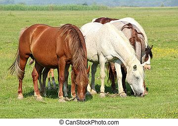 paarden, in, wei