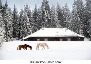 paarden, in, winter, bos