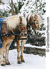 paarden, kerstmis