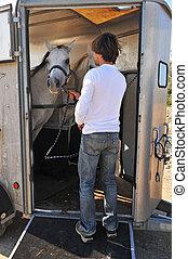 paarden, man, schamelaanhanger
