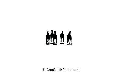 paarden, nearer, weg, silhouette, kudde, rennende , zwarte...