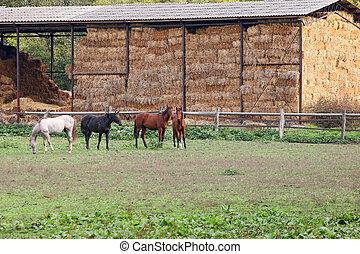paarden, op, boerderij, landbouw