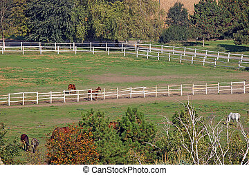 paarden, op, boerderij, landelijk landschap