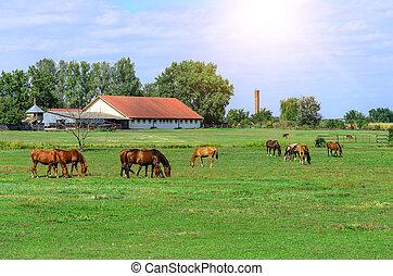 paarden, op, de, farm.