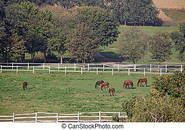 paarden, op, wei, boerderij, landbouw