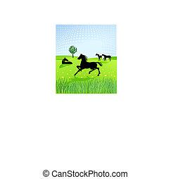 paarden, paddock