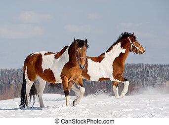 paarden, pinto