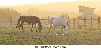 paarden, ranch, twee