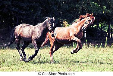 paarden, rennende , twee