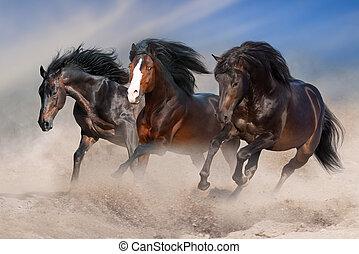 paarden, uitvoeren, galop
