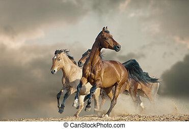 paarden, uitvoeren, in, een, wild