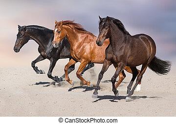 paarden, uitvoeren, vasten