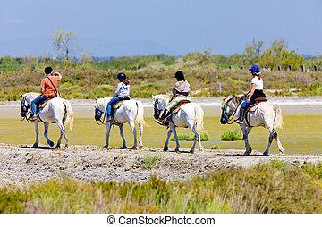 paardrijden, parc, regionaal, de, camargue, provence,...