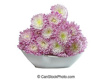 paarse , chrysant