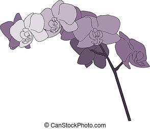 paarse , orchidee, illustratie, stengel