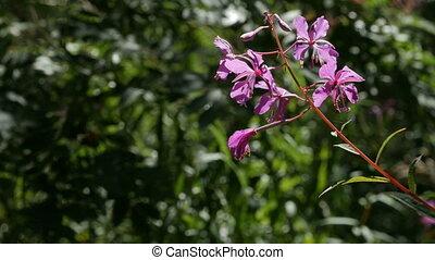 paarse , tegen, groen bos, gezien, bloemen