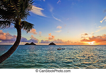 pacífico, lanikai, amanhecer, havaí