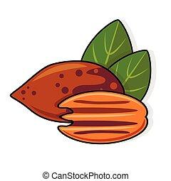pacana, hojas, nueces