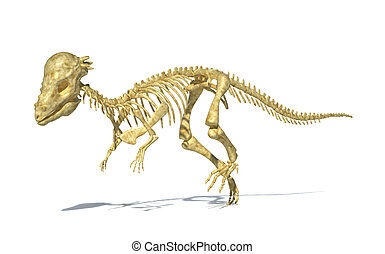 Pachycephalosaurus dinosaur, full photo-realistic skeleton, scientifically correct. Perspective view. On white background. WIth drop shadow and clipping path included.
