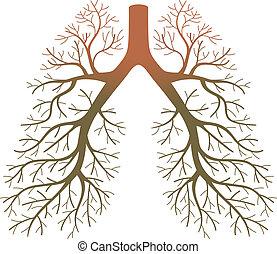 pacientes, pulmão
