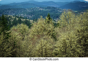 Pacific northwest forest in winter