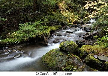 Pacific Northwest Forest Stream
