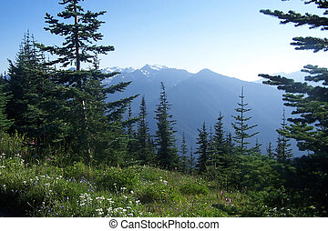 Pacific Northwest Mountains - The Olympic mountain range in...