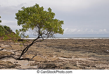 Pacific Ocean shore with rocks and tree