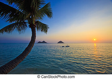 pacific sunrise with palm tree,boats, and islands
