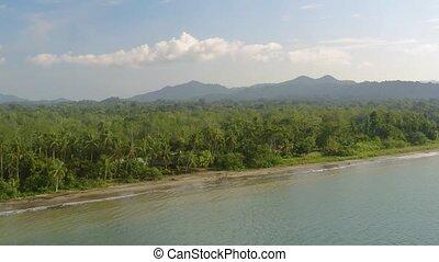 pacifique, rainforest, côte