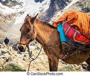 pack donkey peru - Pack animal on the Salkantay trek in Peru