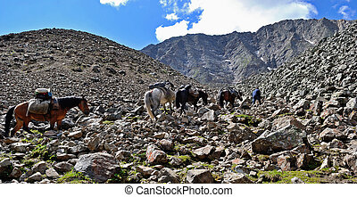 Pack horses in the mountains