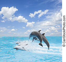 pack of jumping dolphins, beautiful seascape with deep ocean...