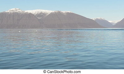 Pack of seal - A pack of seals swimming in arctic waters...