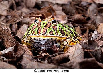 Frosch Als Haustier